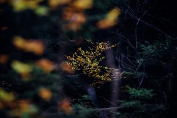 Dunkler Herbst, Wald Impressionen aus dem Harz