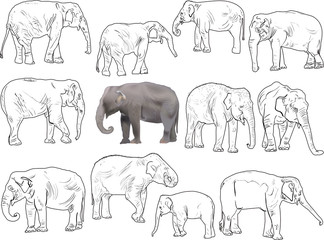 set of twelve elephants isolated on white