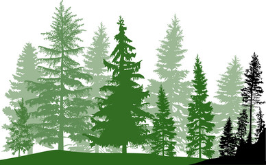 fir trees dark and light green forest on white