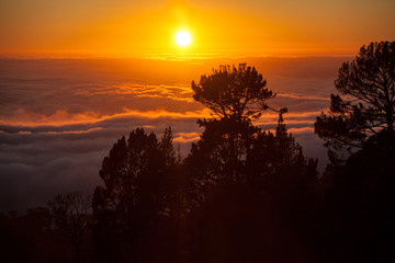 Sunset, Trees, and Fog in Bay Area, California