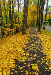 Autumn leaves. a path in the city strewn with fallen multicolored leaves
