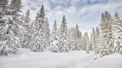 Winter landscape with snow covered trees