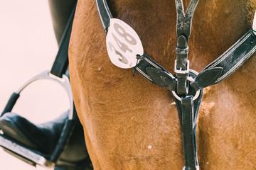 Papiers peints Equitation Springpferd