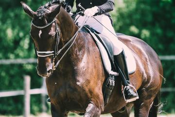 Photo sur Plexiglas Equitation Dressurpferd