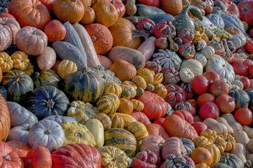 Thanksgiving - Pumpkin - it's autumn