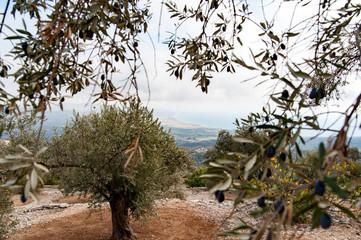 Landschaft Samos Griechenland