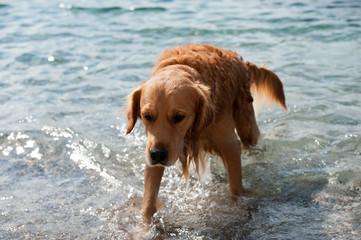 Strandhund kommt aus dem Meer