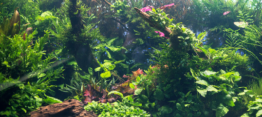 Beautiful freshwater green aquarium with plants.