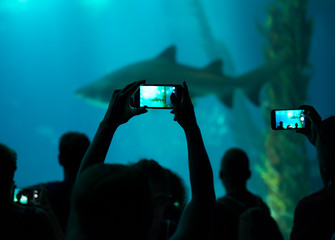 Many people observe shark in the oceanarium.