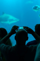 Many people observe the fish in the oceanarium.