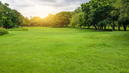 Green Park. Green tree and green grass in urban City at Sunset.