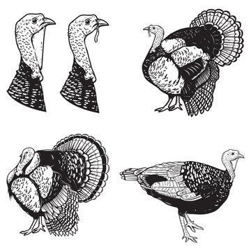 Set of turkey illustrations. Design elements for emblem, sign, poster, banner. Vector illustration