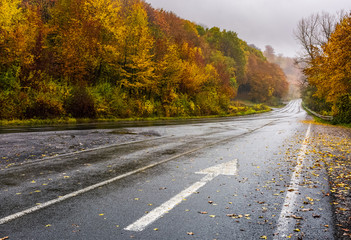 wet asphalt road through forest in deep autumn. gloomy rainy day background. painted arrow sign in fallen yellow foliage showing the direction