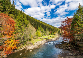 gorgeous autumn landscape in mountains. small river flows through rural valley among coniferous forests. few trees in red and yellow foliage