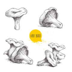 Fototapeta Hand drawn sketch style chanterelle mushroom setisolated on white background. Healthy natural forest food collection. Vector illustration. obraz
