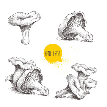 Hand drawn sketch style chanterelle mushroom setisolated on white background. Healthy natural forest food collection. Vector illustration.