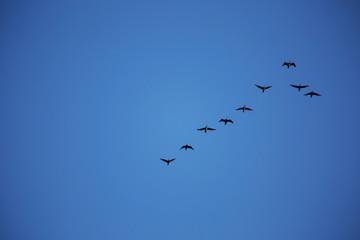 Vögel fliegen im Schwarm