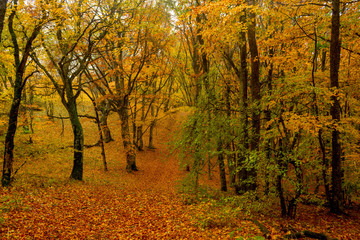 Beautiful autumn forest 22