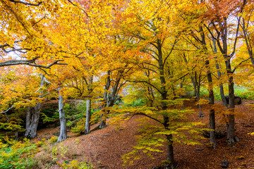 Beautiful autumn forest 9