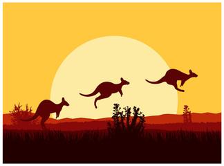 Australian desert. Silhouette of kangaroo. Sunset.