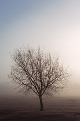Lone tree at dawn with fog