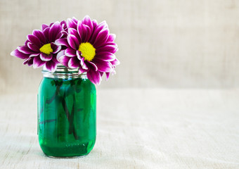 bright purple argyranthemum flowers in a small mason jar filled with green colored water on a tan cloth background with copy space