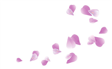 Purple Violet flying petals isolated on White background. Sakura Roses petals. Vector