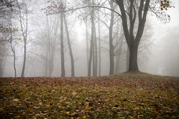 Autumn forest and fog