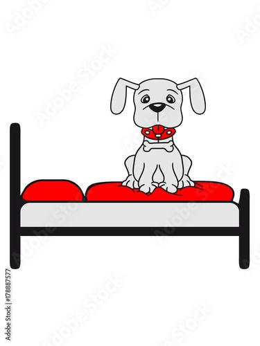 Bett Schlafen Bequem Gemutlich Warten Hund Welpe Suss Niedlich