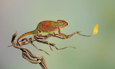 Close up of chameleon on branch
