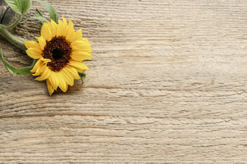 Wall Mural - Single sunflower on wooden background, copy space.