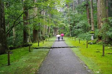苔に覆われた神社の境内