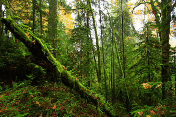 a picture of an Pacific Northwest forest