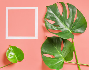 Wall Mural - Tropical leaves of monstera plant