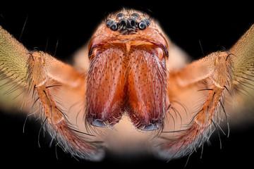 Extreme magnification - House spider (Tegenaria agrestis)