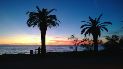 Bright sunset on the Montenegrin coast in the Bar. Silhouettes of palm trees and a man sitting on a bench on the shore