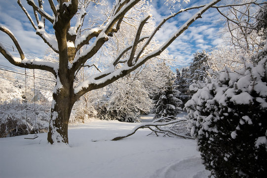The sun rises over a suburban backyard after an overnight snowfall.