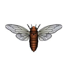 cicada. Cicadidae. Sketch of cicada. cicada isolated on white background.