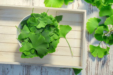 Medicinal leaves from the ginkgo biloba tree from China. Ginko biloba leaf on an white vintage table. View from above.  Wall mural