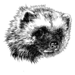Wolverine sketch head vector graphics monochrome black and white drawing