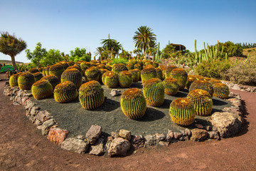 spherical cacti in a botanical garden, palm trees and blue sky in the background