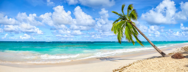 Coconut Palm tree on white sandy beach in Punta Cana, Dominican Republic. Panoramic view.