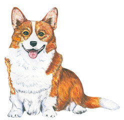 Red dog. Breed Welsh Corgi, symbol of the year.