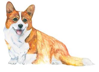 Watercolor dog. Breed Welsh Corgi, symbol of the year.