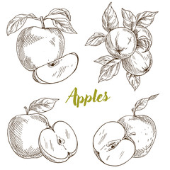 Apples, branch and leaves