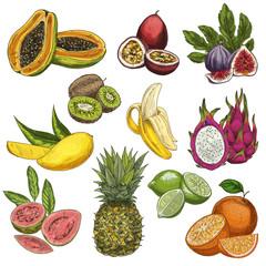 Tropical fruits. Guava, passion fruit, figs, kiwi, mango, banana, pitahaya, guava, pineapple, lime, orange.