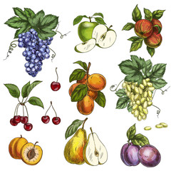 Garden fruits with leaves and branches. Cherry, apples, pear, plums, apricots, grapes.