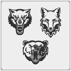 Set of animals. Bear, wolf and fox.