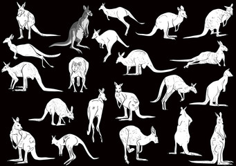 set of twenty one kangaroo isolated on black