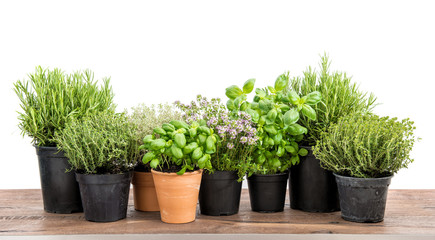 Fresh herbs isolated white background Basil rosemary thyme